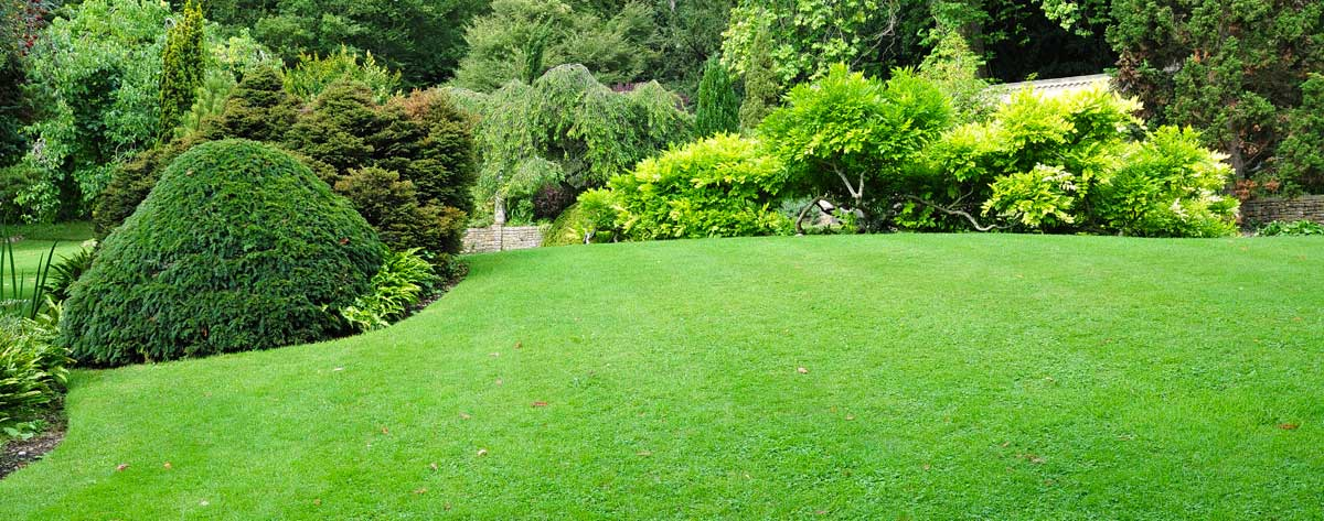 Prep your lawn for spring, first step... Preparation.